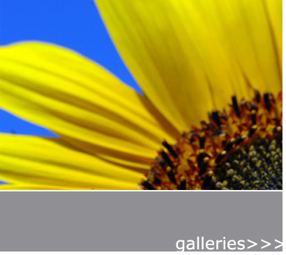 mcephotography.com - galleries